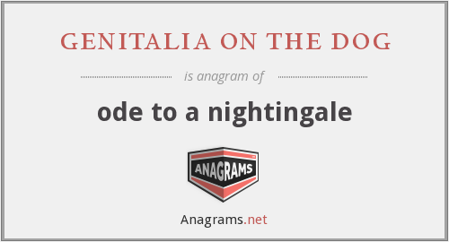 genitalia on the dog - ode to a nightingale